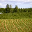 Finnish agriculture — Stock Photo #7798026
