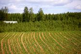 Finské zemědělství — Stock fotografie