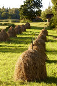 Finnish agriculture — Stock Photo