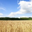 Finnish agriculture — Stock Photo #7840689