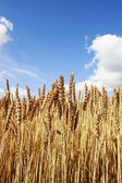 Finnish agriculture — Foto Stock