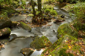 Autumn Brook — Stock Photo