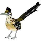 大きいロード ランナーの鳥 — ストックベクタ