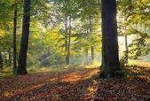 Autumn dawn — Stock Photo