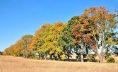 Arbres d'automne — Photo