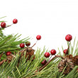 Cone and berry Christmas border - Stockfoto