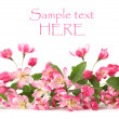 Foto Stock: Pink spring flower border