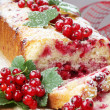 Red currant sponge cake — Stock Photo