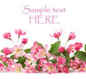 Pink spring flower border — Stock Photo