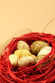 Quail Easter eggs in a red nest — Stock Photo