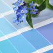 Forget-me-nots on color swatch — Stock Photo