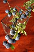 Sloe berries — Stock Photo