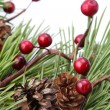 Cone and berry Christmas border — Stockfoto