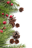 Cone and berry Christmas border — Foto Stock