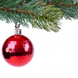 Christmas ball on green spruce branch — Stock Photo