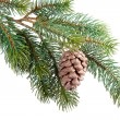 Photo: Fir branch with pine cone isolated on white