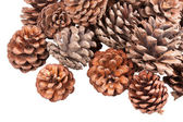 Stack of pine cones, isolated on white — Stock Photo