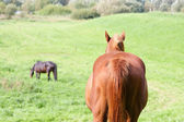 Rear view of a brown horse in a meadow — ストック写真