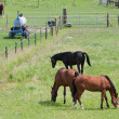 Stock Photo: Grazing horses in meadow with boundary