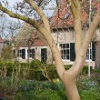 Dutch house with ornamental garden with blooming magnolia — Stock Photo