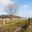 Stock Photo: Dutch rural landscape in springtime