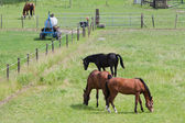 Grazing horses in a meadow with boundary — Stock Photo