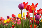 Beautiful multi coloured flowers with copyspace for text — Stock Photo