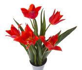 красивые красные тюльпаны в вазе, изолированные на белом — Стоковое фото