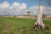 Paisaje típico holandés con el tronco de árbol y molinos de viento — Foto de Stock