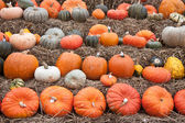 Pumpkins for sale at Dutch market — Stockfoto