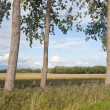 Trees in a typical Dutch rural landscape — Stock Photo