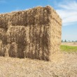 Haystack in the  farmland of the Netherlands — Stock Photo