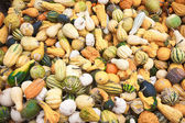 Coloured pumpkins at a market, ready to sell — Stock Photo