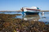Boat at ebb tide in Bretagne, France — Stock Photo