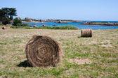 Haystack at island Brehat in Bretagne, France — Stock Photo