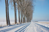 Wintertime in the farmland of the Netherlands — Stock Photo