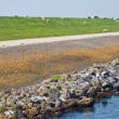 Stock Photo: Big massive Dutch breakwater with sheep