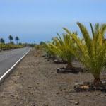 New road through volcanic landscape at La Palma — Stock Photo #7561135