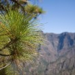 Royalty-Free Stock Photo: Pine tree at border of Caldera de Taburiente, La Palma