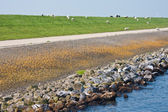 Big massive Dutch breakwater with sheep — Стоковое фото