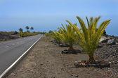 New road through volcanic landscape at La Palma — Stock Photo