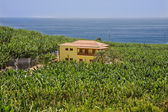 House surrounded by banana plantations at La Palma — Foto Stock