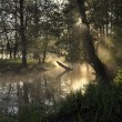 Fog over the river in the forest at dawn - Stock Photo