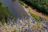 Blue flowers on a cliff above the river — Stock Photo