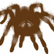 Big spider — Stock Photo