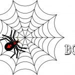 Black Spider — Stock Photo