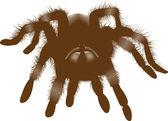 Büyük örümcek — Stok fotoğraf