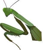 Bidden mantis — Stockfoto