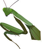 Rezar mantis — Foto Stock