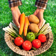 Farmer with a basket full of biological vegetables — Stock Photo